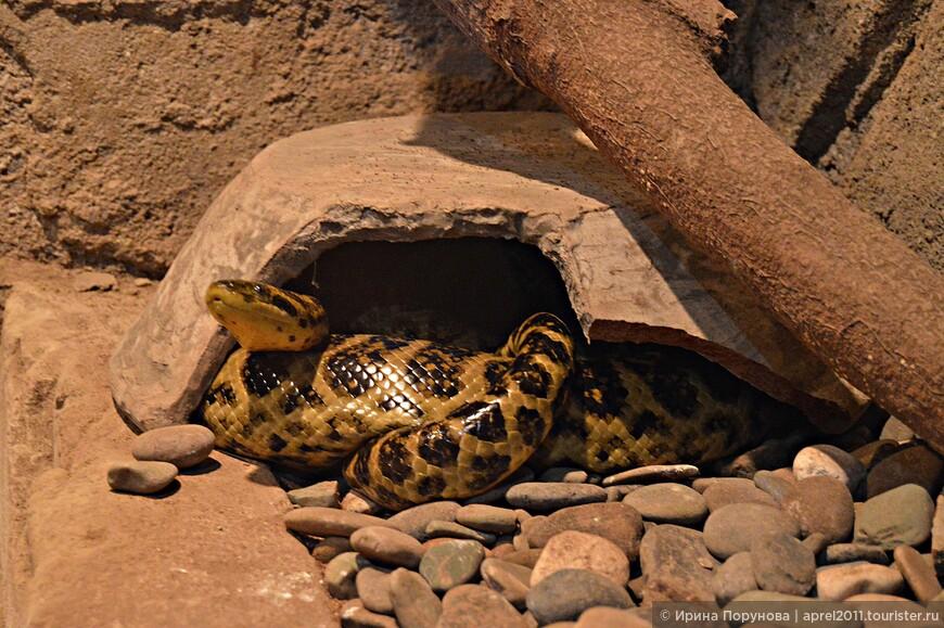 Очень боюсь змей... В таких местах я всегда себя чувствую плохо, но ради ребенка хожу, смотрю.