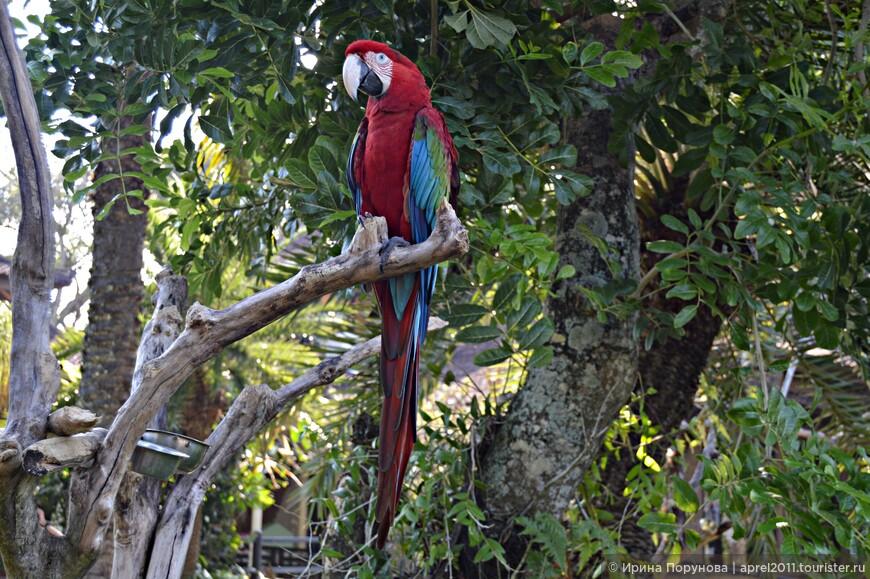 Этот попугай умеет говорить несколько фраз на английском языке