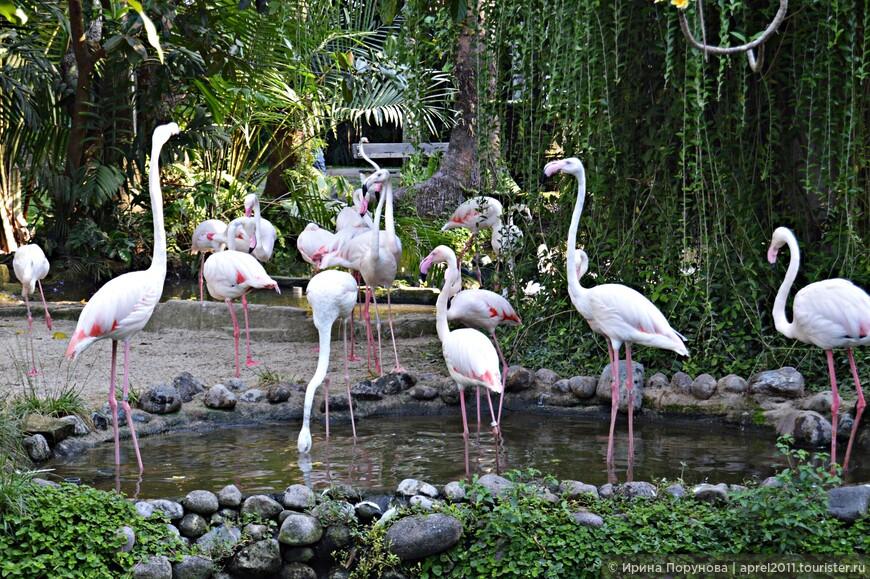 Розовые фламинго в парке птиц