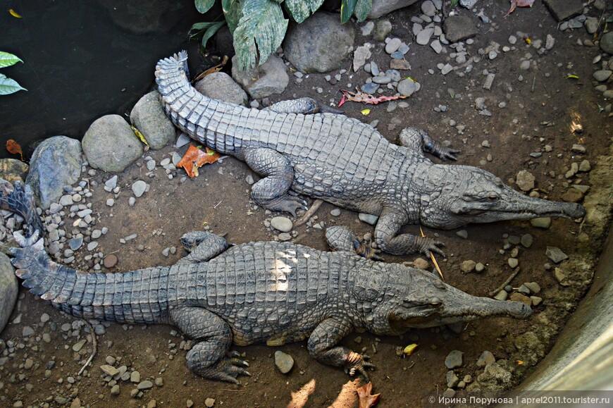 Смотритель предложил нам купить на обед крокодилу курицу. Курицу купили, крокодил слопал её одним щелчком пасти...
