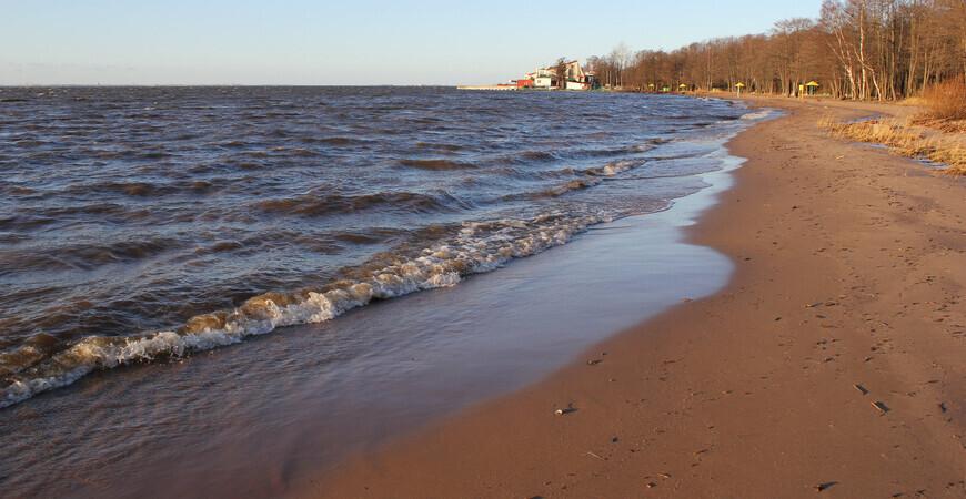 Пляж «Морские Дубки» в Лисьем Носу
