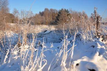 Деревня Рубчойла в январе