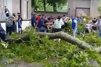 У Дворца шекинских ханов на туристов рухнуло 500-летнее дерево: ранены 19 человек