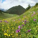 Национальный парк Тушетия