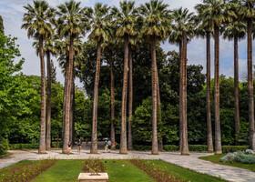Королевский парк в  Афинах