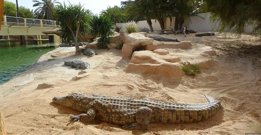 Крокодиловая ферма Джербы