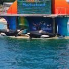 Морской парк Marineland Antibes