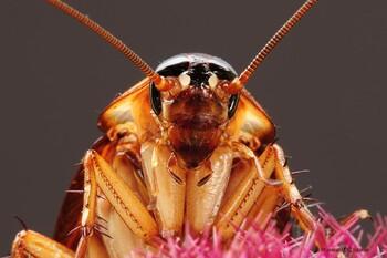 В Сочи – нашествие летающих пятисантиметровых тараканов