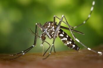 Туристов предупреждают об эпидемии лихорадки денге на Филиппинах