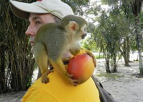 Провинция Маровийн — удивительный уголок Суринама