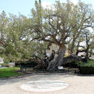 Yaffa Ben Ami Garden