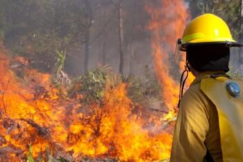 Пожары охватили леса на юге Франции