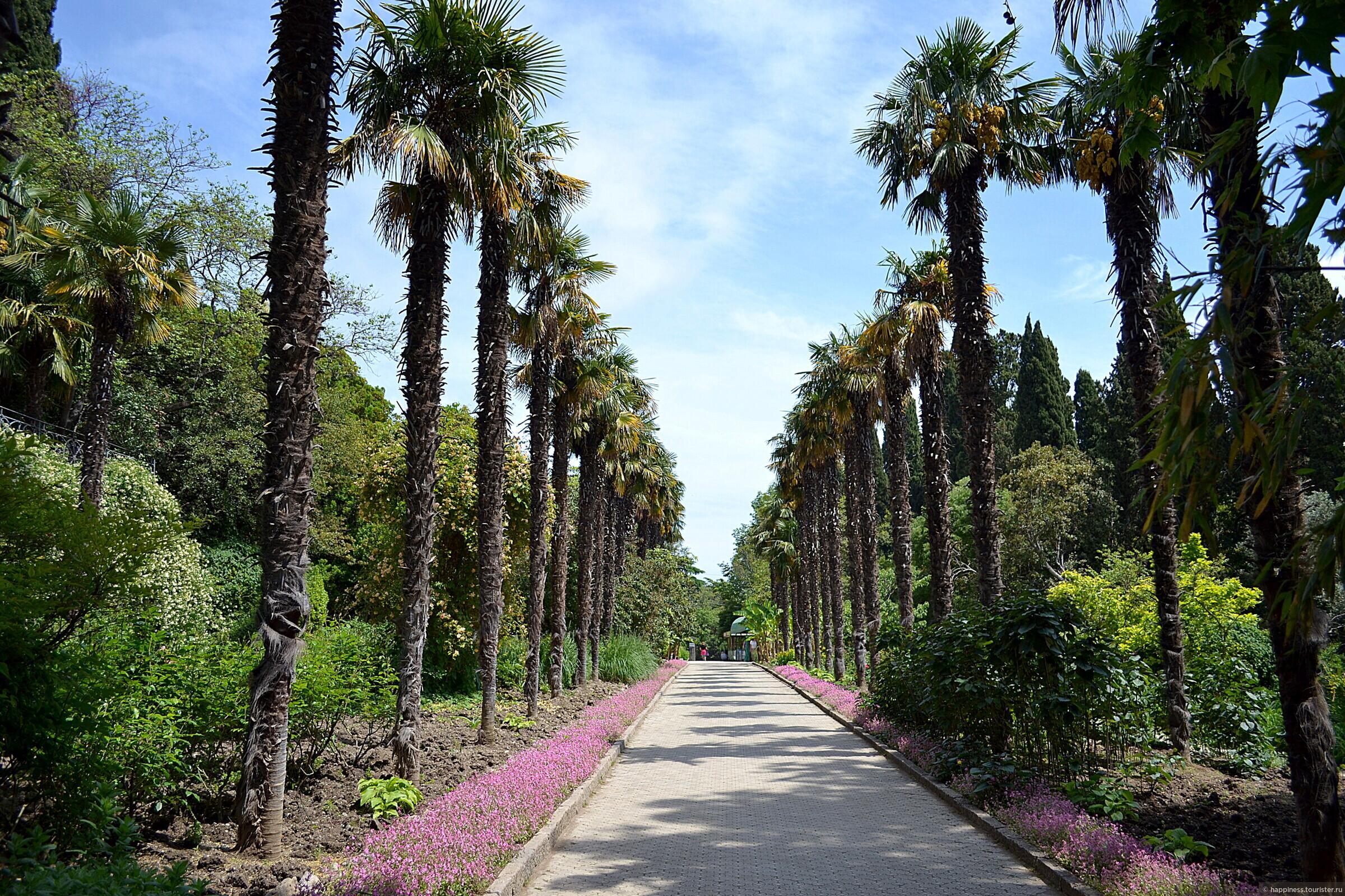 мнению ученых, фото пальмы крыма этом