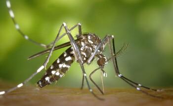 Туристов предупреждают о вспышке лихорадки денге во Вьетнаме