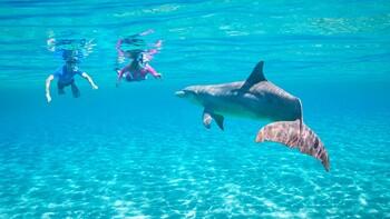Рядом с Хургадой открылся новый дельфинарий