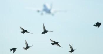 В Екатеринбурге экстренно сел самолёт, столкнувшийся со стаей птиц