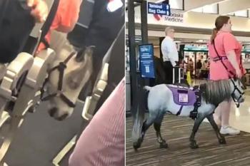 В США женщина взяла в самолёт пони