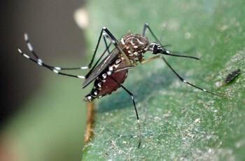 На Филиппинах объявили национальную эпидемию лихорадки Денге