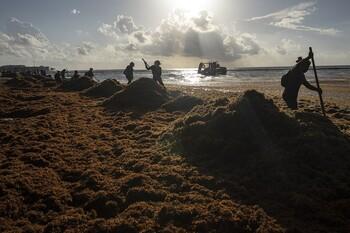 Водоросли на пляжах Мексики отпугивают туристов