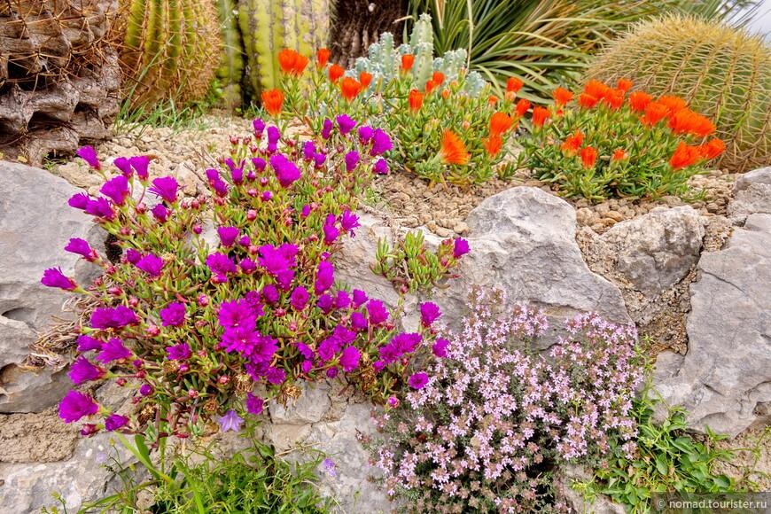 Как я уже писал, кроме кактусов тут растут всякие красивые цветочки....