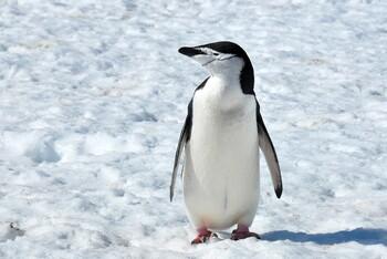 Airbnb предложил туристам бесплатную поездку в Антарктику в обмен на научное исследование