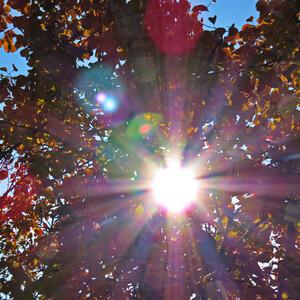Однажды осенью