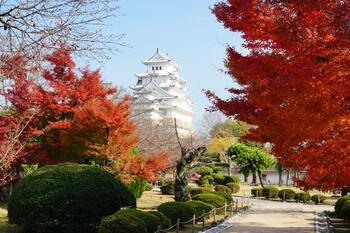 Сезон красных клёнов начался в Японии