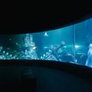 Океанариум в Стамбуле «Sea Life Istanbul»