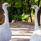 Парк «Феникс» в Ницце