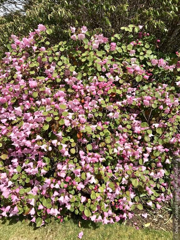 В парке Инверари все цветет и благоухает