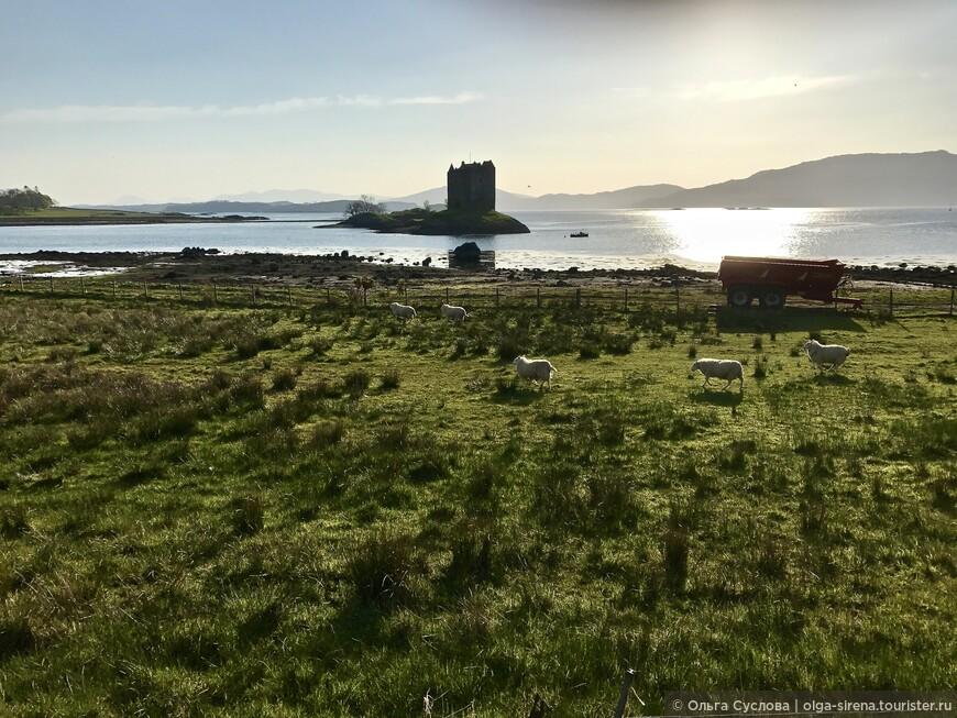 Мрачнй замок Сталкер и веселые овечки