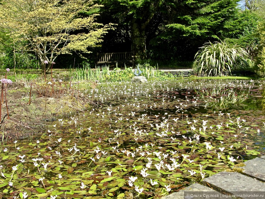 Живописный пруд в в садах Армадейла с необычными водными растениями