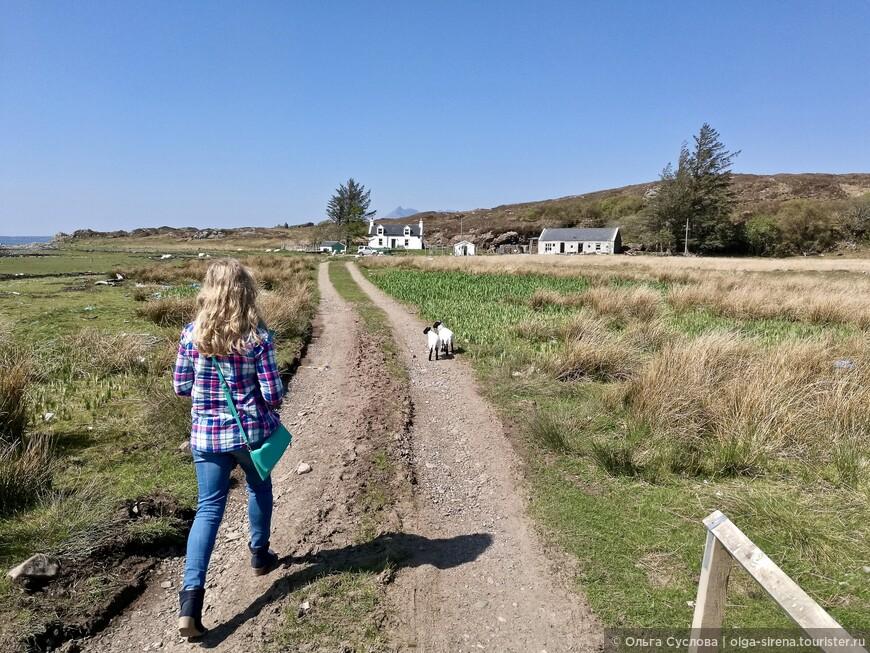 Путь к замку Дунскейт пролегает через территорию фермы