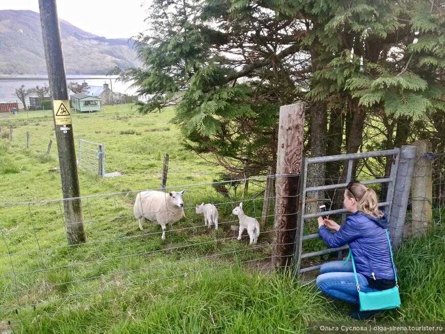 Невозможно пройти мимо этой милой овечьей семейки