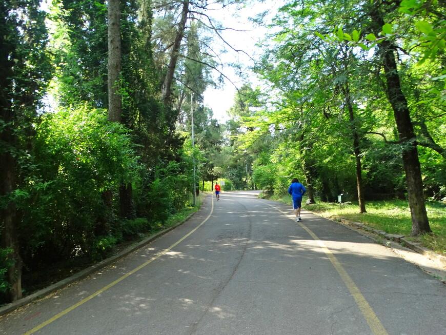 Местные жители любят в лесном парке заниматься спортом, устраивать пикники, просто гулять.