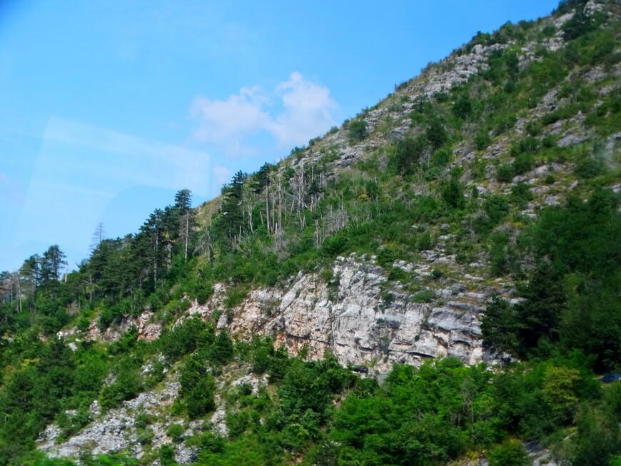 Горы покрыты красивыми хвойными лесами.
