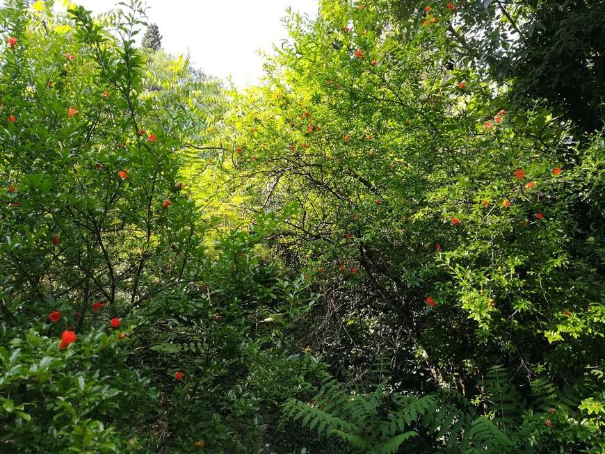 В лесном парке (шума Горица) произрастает много видов южноевропейских деревьев и  кустарников. Среди них кипарисы, алеппские сосны, троянские дубы, цветущие роскошными алыми цветами гранатовые деревья.