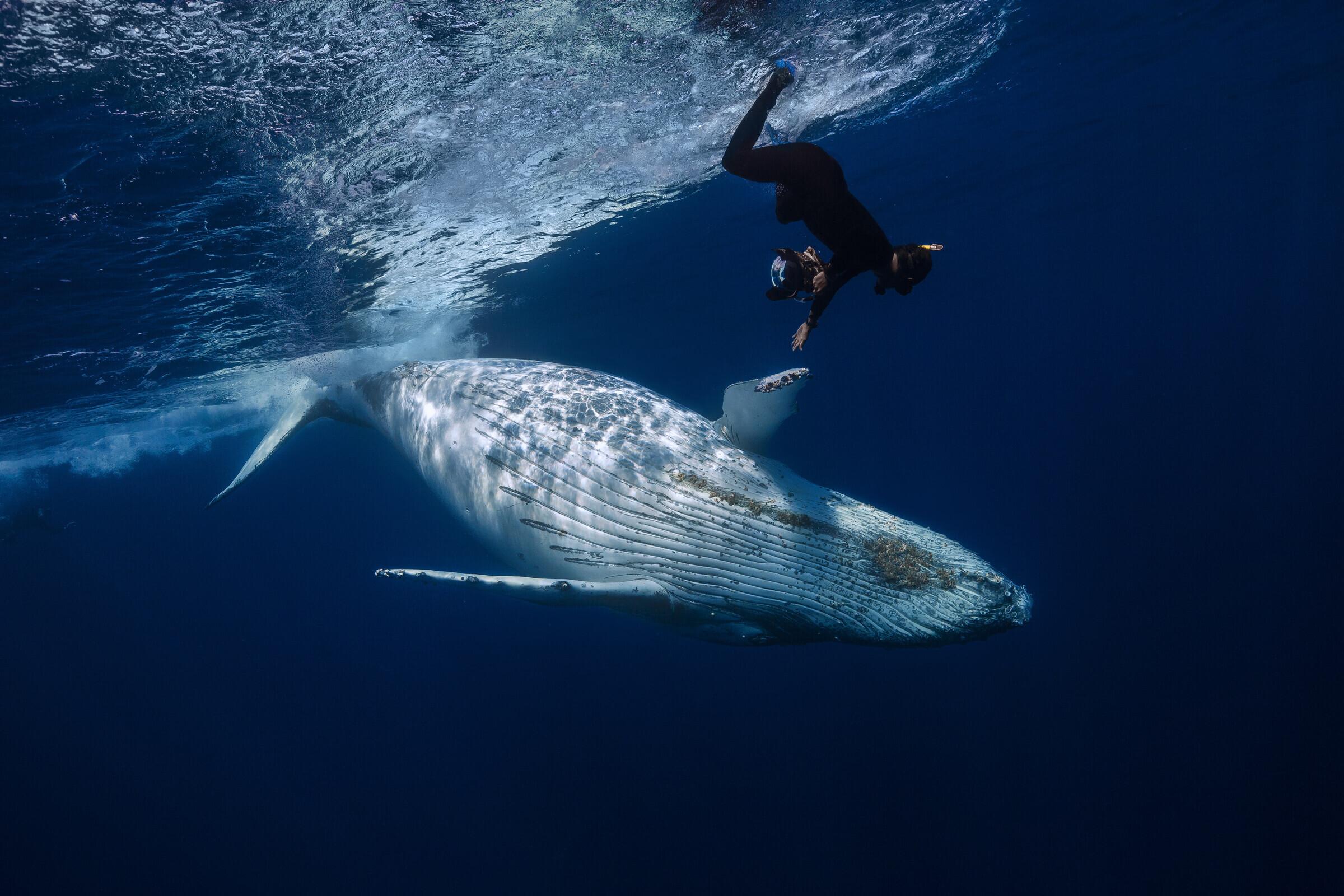 кит фото с людьми материал лучше подойдет