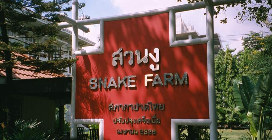 Змеиная ферма в Бангкоке