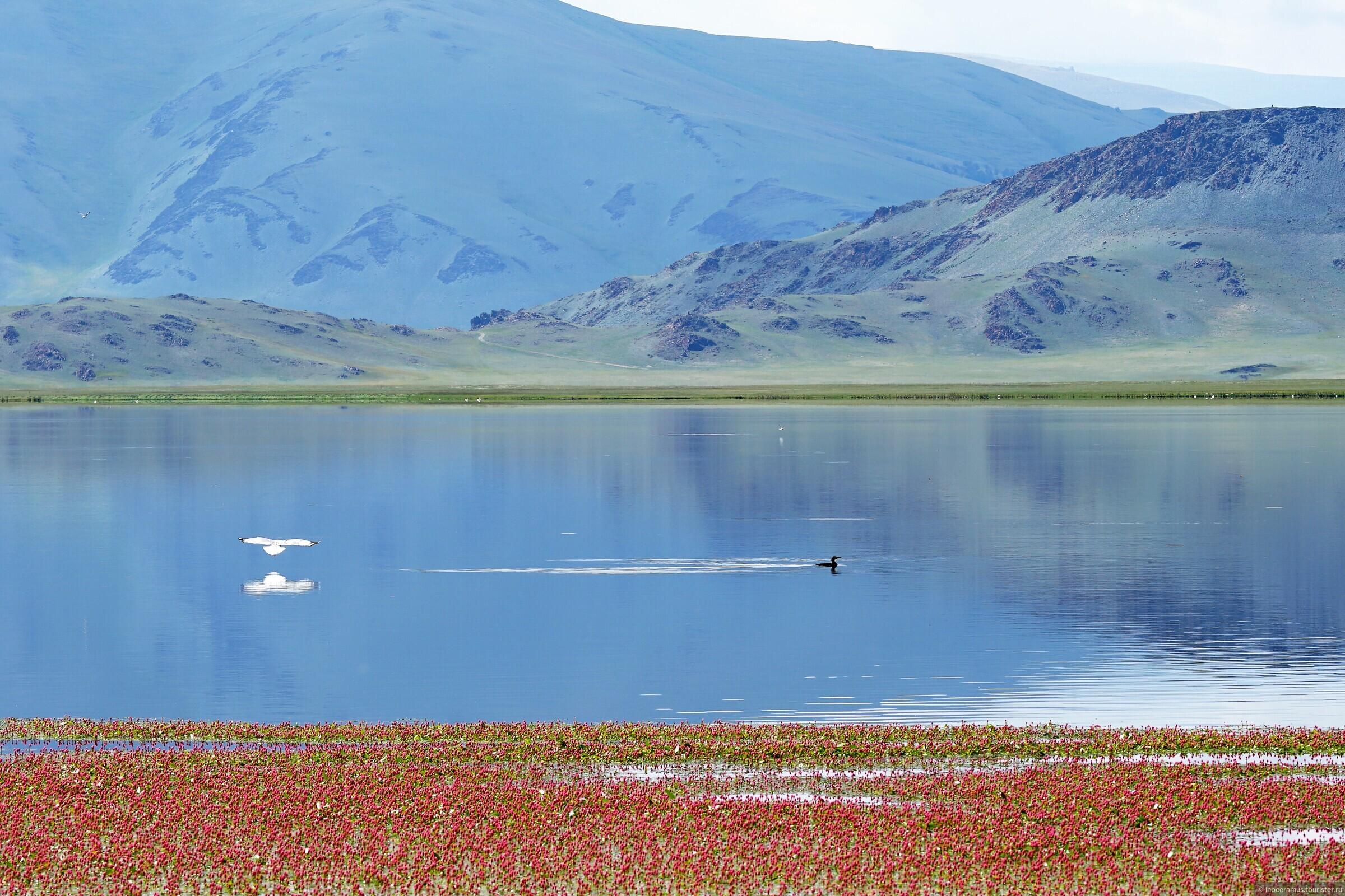 фото растительного мира монголии носков играет доктора