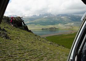 Фауна Монголии (версия начинающего орнитолога)
