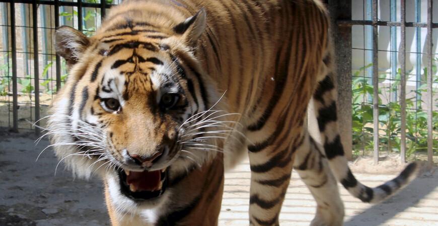 Зоопарк Саранска