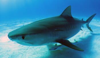 Акула напала на двух британских туристов в Австралии