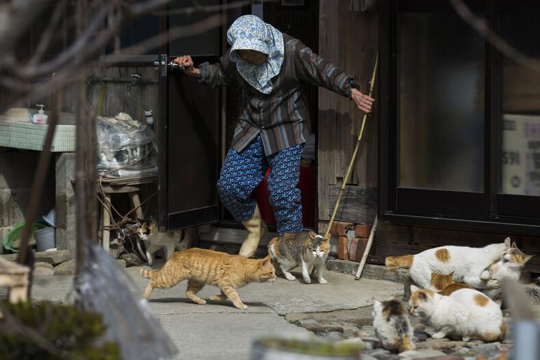 Фото с островов кошек в Японии: удивительная земля, где котов в разы больше, чем людей