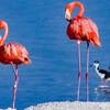 Фламинго, Рио Лагартос и Розовый змей