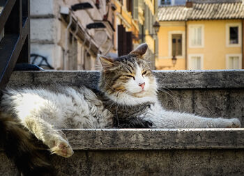 Коты на площади Торре Арджентина