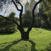 Центральный парк летом