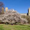Центральный парк весной в цвету
