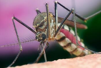 Туристов предупреждают о малярии в Доминикане и Колумбии