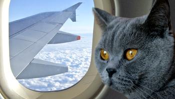 Каждый третий турист из РФ летает в самолёте с домашним животным